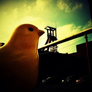 canary coal mine